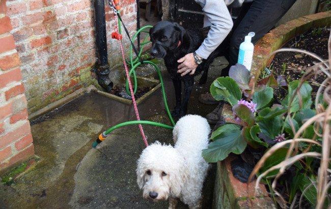 Dog Spa at Coastguard Cottage