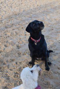 Dogs in Norfolk