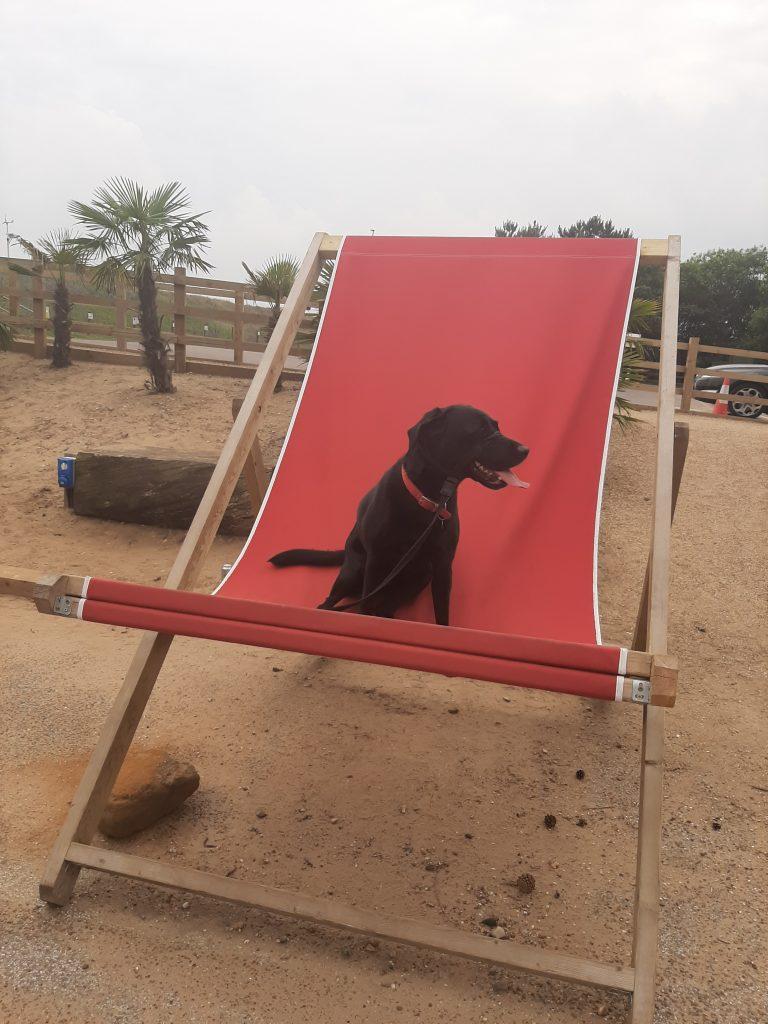 Coastguard Cottage Dog Friendly