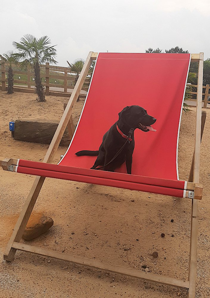 Dog Friendly Coastguard Cottage
