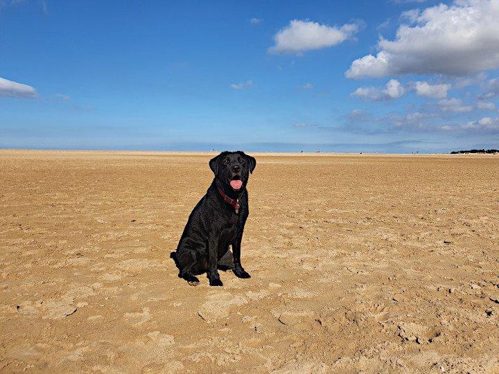 Dog Friendly Wells next the sea beach